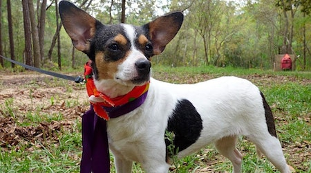 3 cuddly canines to adopt now in Jacksonville