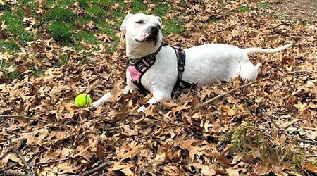 Looking to adopt a pet? Here are 4 delightful doggies to adopt now in Detroit