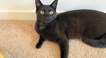 3 cuddly kittens to adopt now in Charlotte