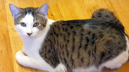These Pittsburgh-based felines are up for adoption and in need of a good home
