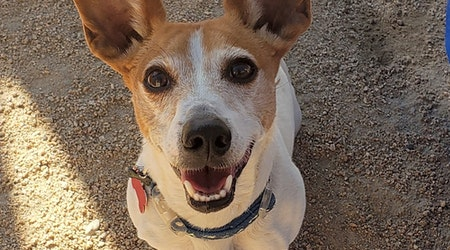 Looking to adopt a pet? Here are 6 cuddly canines to adopt now in Phoenix