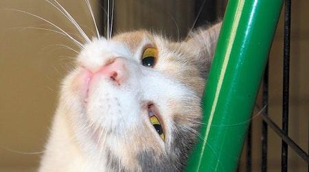 3 cute kitties to adopt now in Mesa