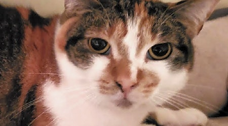 5 lovable cats to adopt in Long Beach
