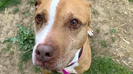 Want to adopt a pet? Here are 3 cuddly canines to adopt now in Philadelphia