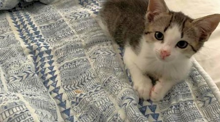 These Orlando-based kittens are up for adoption and in need of a good home