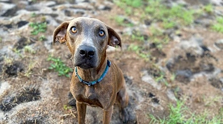 Want to adopt a pet? Here are 6 lovable pups to adopt now in Tampa