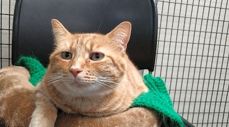 These Raleigh-based felines are up for adoption and in need of a good home
