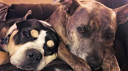 These Denver-based canines are up for adoption and in need of a good home