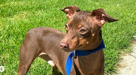 5 delightful doggies to adopt now in Los Angeles