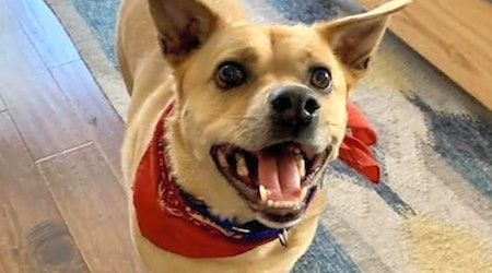 6 cuddly canines to adopt now in Long Beach