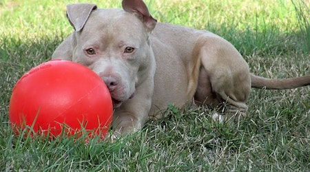 Want to adopt a pet? Here are 4 lovable pups to adopt now in Indianapolis
