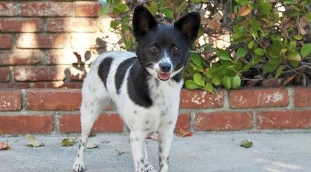 These Los Angeles-based doggies are up for adoption and in need of a good home