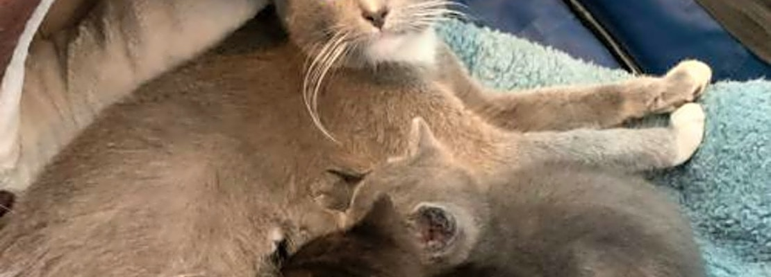 4 charming cats to adopt now in San Jose