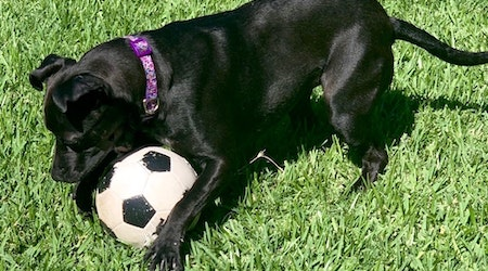 7 lovable pups ready to adopt now in Fort Worth