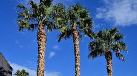 Top Las Vegas news: Station Casinos starts testing employees; killer rabbit virus discovered; more