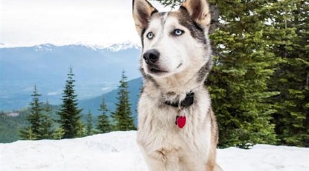 Want to adopt a pet? Here are 5 cuddly canines to adopt now in Seattle