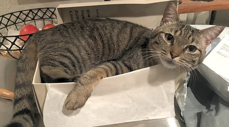 These Atlanta-based cats are up for adoption and in need of a good home