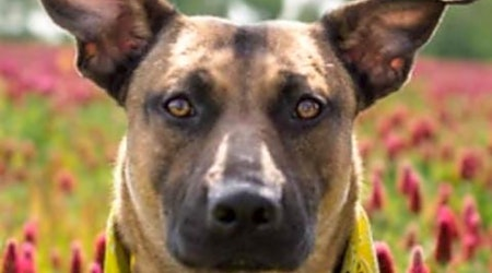 Want to adopt a pet? Here are 5 cuddly canines to adopt now in St. Louis
