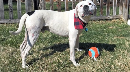 Always wanted a pet? Here are 6 lovable pups to adopt now in Denver