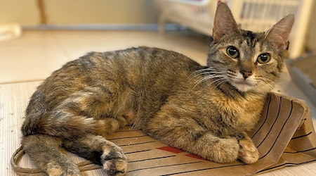 Looking to adopt a pet? Here are 6 charming cats to adopt now in Baltimore