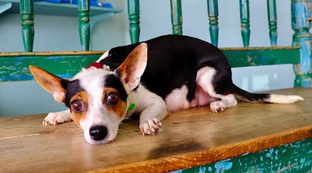 Want to adopt a pet? Here are 7 lovable pups to adopt now in San Antonio
