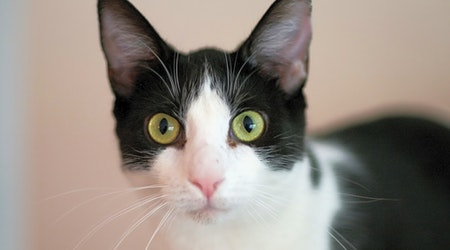 Looking to adopt a pet? Here are 4 cool kitties to adopt now in Jersey City