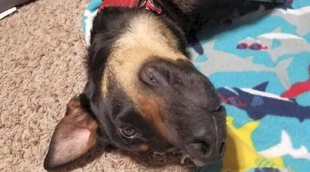 7 cuddly canines to adopt now in Minneapolis