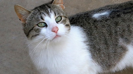 3 furry felines to adopt now in Pittsburgh