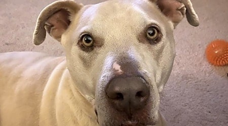 7 cuddly canines to adopt now in Denver