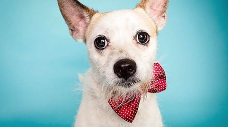 Want to adopt a pet? Here are 6 delightful doggies to adopt now in Phoenix