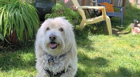 4 delightful doggies to adopt now in Portland