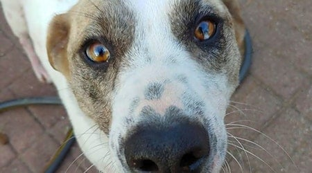 6 cuddly canines ready to adopt now in Plano