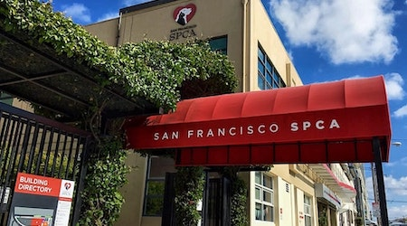 Gimme shelter: SF SPCA celebrates 150 years