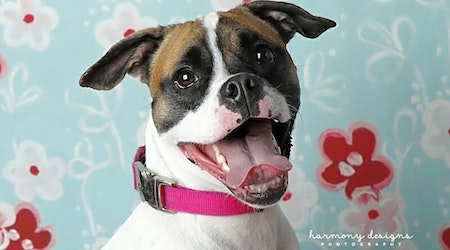 Want to adopt a pet? Here are 6 cuddly canines to adopt now in Nashville