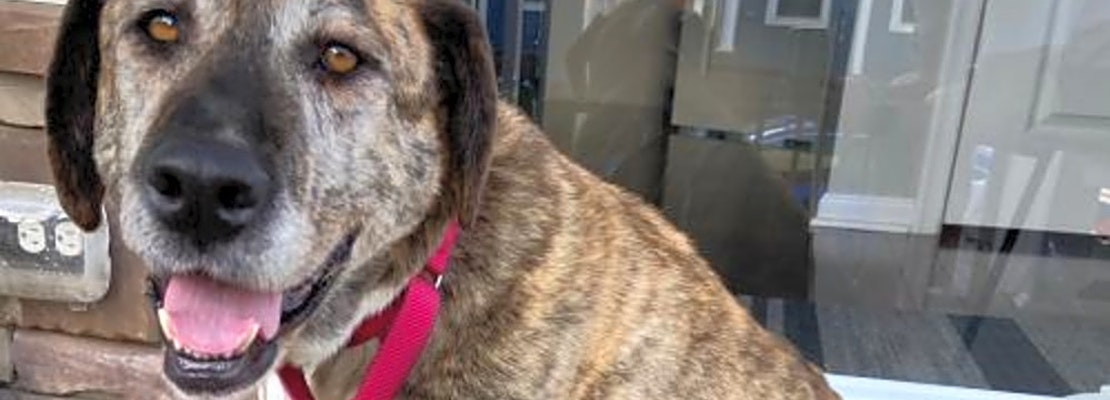 These Washington-based doggies are up for adoption and in need of a good home