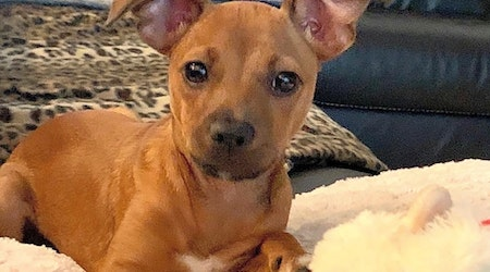3 adorable pups to adopt now in Tampa
