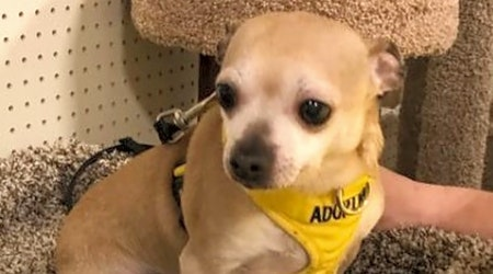 5 cuddly canines to adopt now in Durham