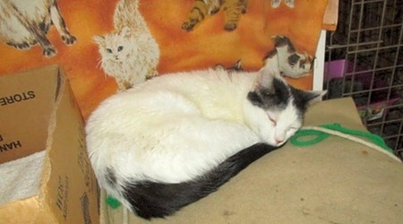 3 furry felines to adopt now in Detroit
