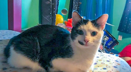 These Pittsburgh-based kitties are up for adoption and in need of a good home