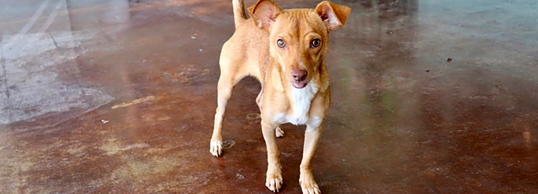 7 lovable pups to adopt now in San Antonio