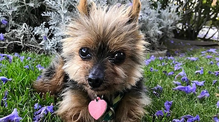 Want to adopt a pet? Here are 5 cuddly canines to adopt now in Los Angeles