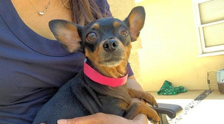 Santa Ana-based dogs up for adoption