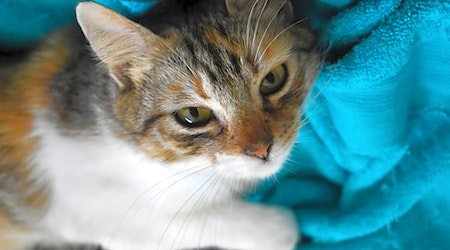 Want to adopt a pet? Here are 7 charming cats to adopt now in Austin