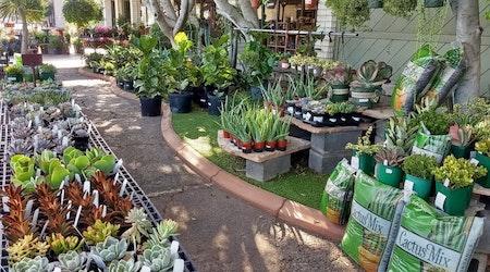 The 4 best plant nurseries in Mesa