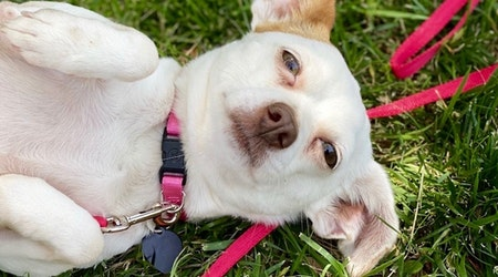 7 cheeky pups ready to adopt now in Fort Worth