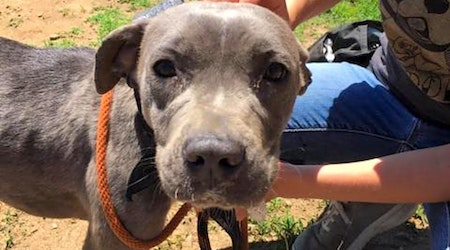 These Philadelphia-based canines are up for adoption and in need of a good home
