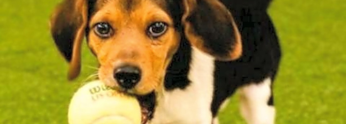 6 perfect pups to adopt now in Chicago