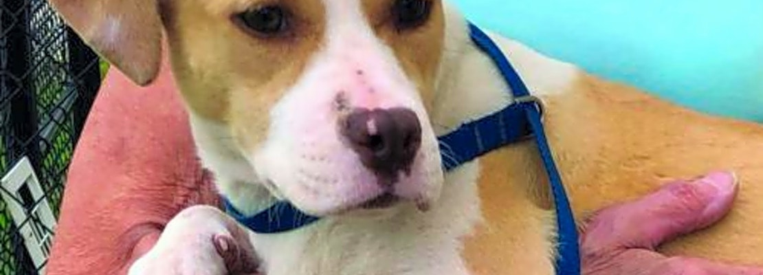 Want to adopt a pet? Here are 5 cuddly canines to adopt now in Washington