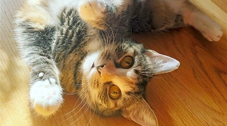 Looking to adopt a pet? Here are 3 furry felines to adopt now in Baltimore