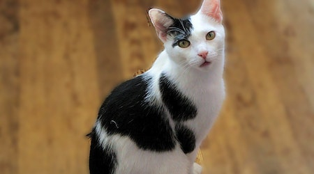 4 charming cats to adopt now in Jersey City